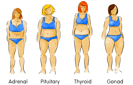 Body Types are Adrenal Pituitary thyroid Gonad