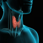 Weight Loss and Hypothyroidism