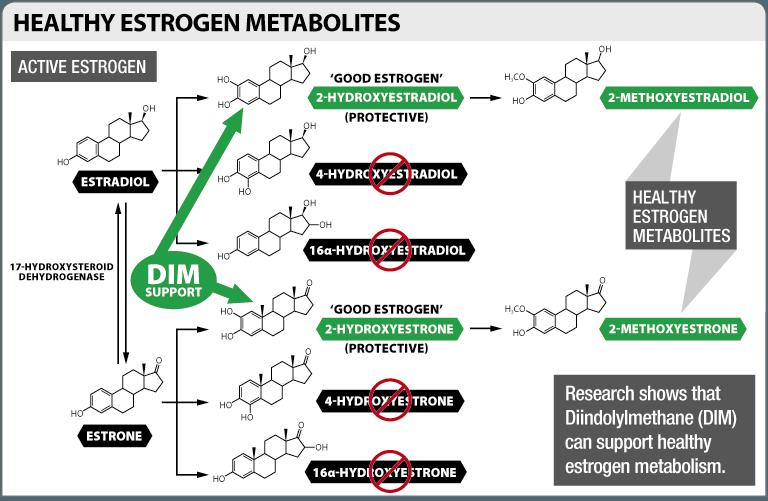 estrogen diagram